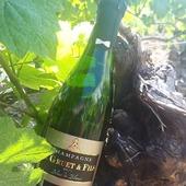 Demi-bouteille Brut Blanc de Blancs 🍾🍇 #champagnegruetetfils #champagne #gruetetfils #gruet  #demibouteille #demi #petitebouteille #petite #bouteille #brut #brutblancdeblancs #blancdeblancs #chardonnay #chardonnaygrapes #vigne #raisin #cl #vignoble #rayon #soleil #rayonsoleil #bulle