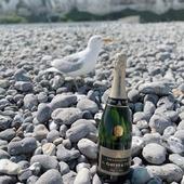 Une petite coupe de Brut Blanc de Blancs madame la Mouette ? 🥂🍾  Nous n'avons pu avoir en photo les phoques mais nous avons eu le plaisir de prendre en photo une mouette 😂🐦   Ps : elle adore le champagne G.Gruet et Fils !  Le Tréport une jolie petite ville. Beaucoup de charme.   Le champagne G.Gruet et Fils vous souhaite de bonnes vacances (sous la pluie, ou pour les chanceux sous le soleil) 🌞🌧  #champagne #gruet #champagnegruetetfils #brut #blancdeblancs #brutblancdeblancs #vacance #vacances #balade #holiday #plage #beach #galet #pebble #sable #sand #mer #sea #changementdair #treport #labaiedelasomme #baiedesomme #animaux #mouette #phoque #champagnelover #champagnelovers