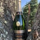""" Chat perché ""   #champagnegruetetfils #champagnegruet #gruetetfils #brut #blancdeblancs #brutblancdeblancs #arbre #vignoble #bulle #bouteille #champagneardenne #marne #bethon"