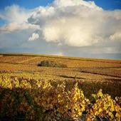 Les vignes au couleurs de l'automne.. 🍁🍂  Arc en ciel 🌈  #champagne #gruet #champagnegruet #champagnegruetetfils #vignes #arcenciel #automne #vignoble #champagneardenne #marne #bethon